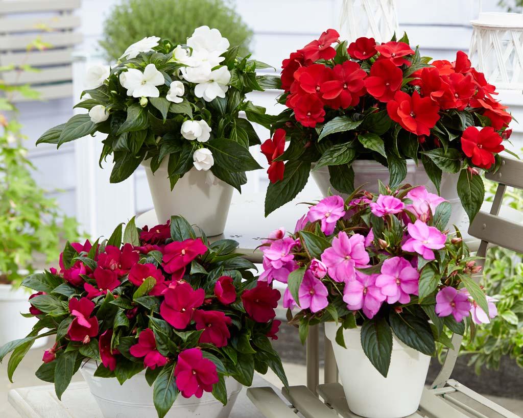 комнатные цветы которые красиво цветут картинки бесплатно широкоформатные обои