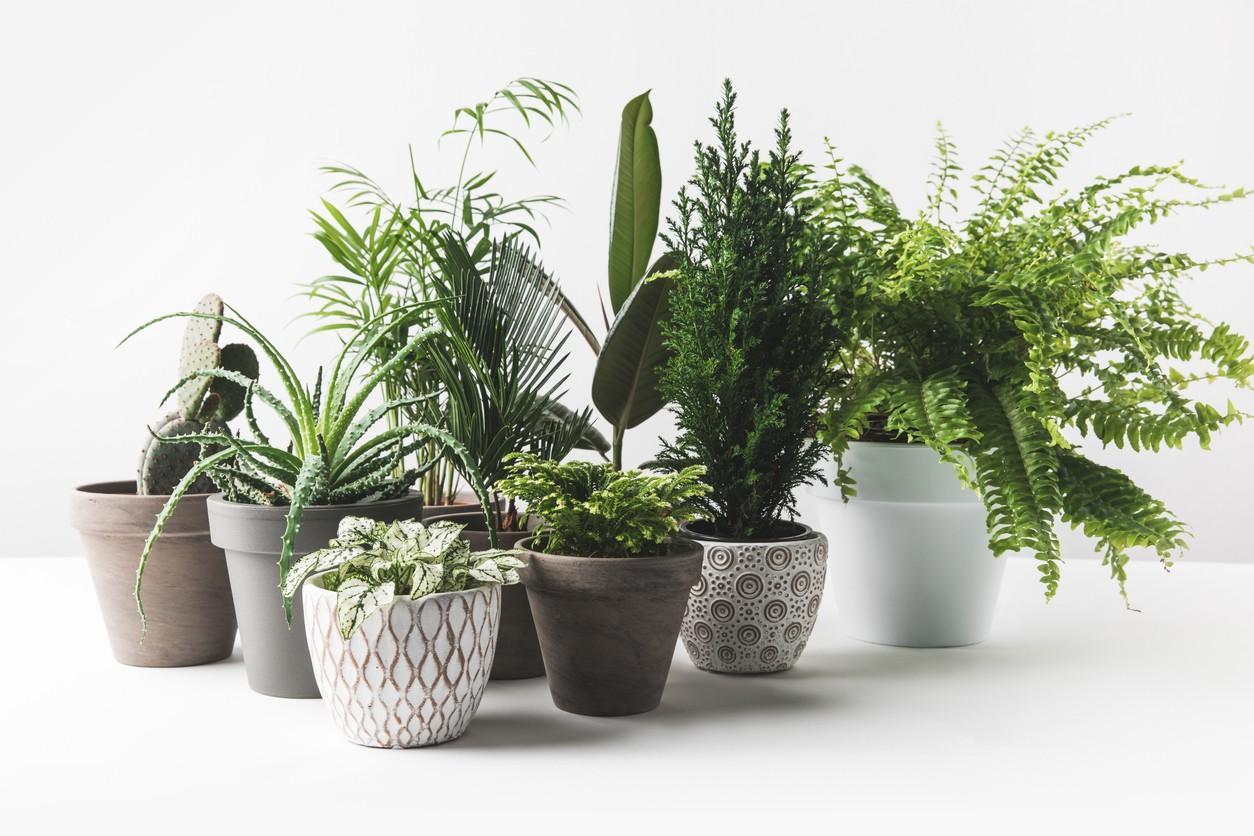 леща список в фото неприхотливых домашних растений хочется